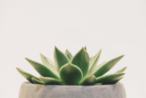 Is agave keto-friendly?